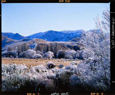 Transparency: Hoar Frost Cardrona Valley