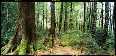 Transparency: Bush Track Fiordland