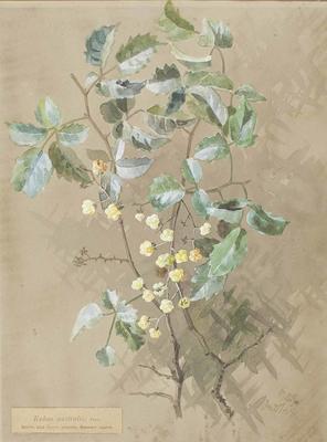 Painting: Rubus australis
