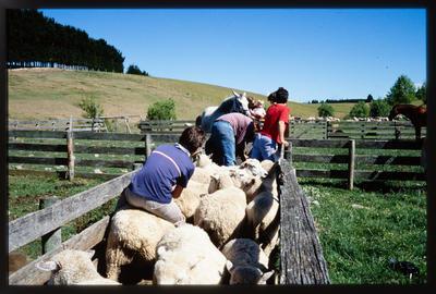 Slide: Family In Sheep Pens