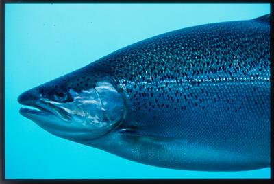 Slide: Fish