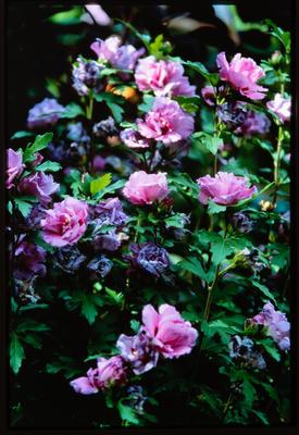 Slide: Flower Garden Paris