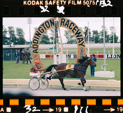 Negative: New Zealand Trotting Cup 1981