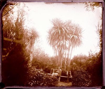 Glass Plate Negative: Ti Palm, Milford