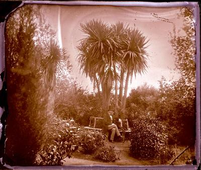 Glass Plate Negative: Ti Palm, Milford