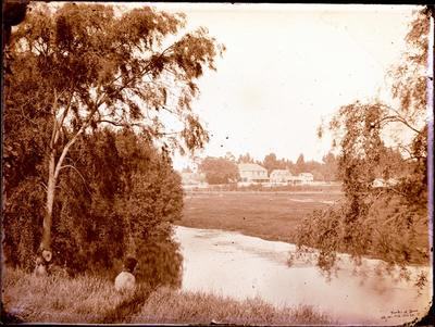 Glass Plate Negative: Banks of the Avon River
