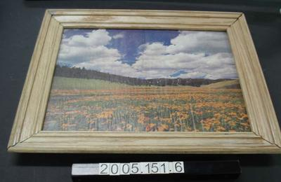 Framed picture (from magazine) of daisy field