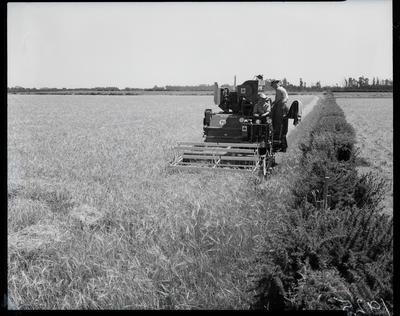 Film Negative: International Harvester Company, threshers working