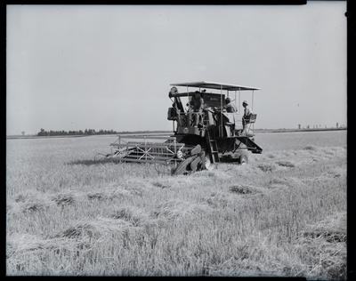 Film Negative: International Harvester Company, working thresher