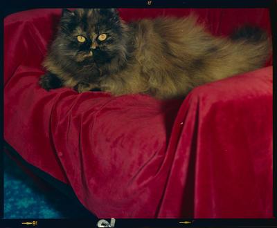 Film Negative: Cat