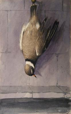 Painting: Sea Dotterel June 1836