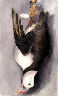 Painting: A Puffin, Seaton, July 1836