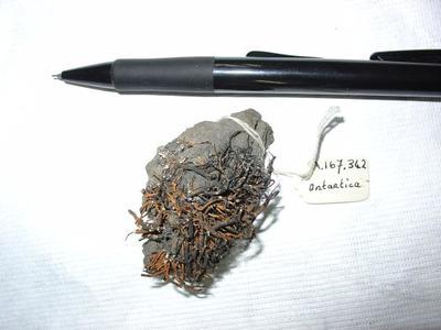 Rock with lichen