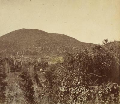 Photograph: Wharekauri