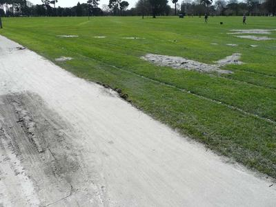 Digital Photograph: Liquefaction in Hagley Park