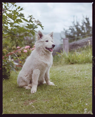 Negative: Anne Vickers' Dog
