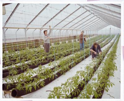 Negative: Commercial Greenhouse Interior