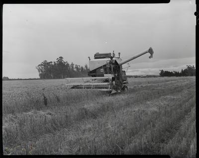 Film negative: International Harvester Company: 8-5 header