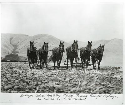 Film negative: Mr C L Berkett: six horses named Bulldozer, Safari, Rose Oday, Echoist, Toushay and Douglas McElwyn