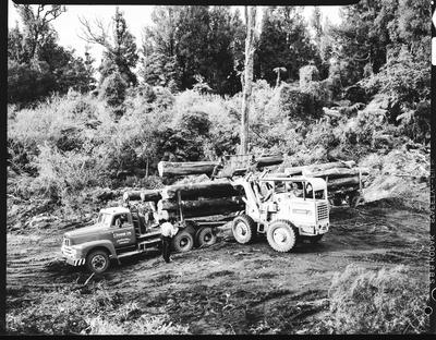 Film negative: International Harvester Company: log loading in forest