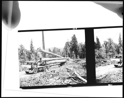 Film negative: International Harvester Company: truck with turntable and log trailer