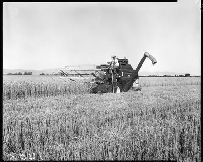 Film negative: International Harvester Company: 203 header