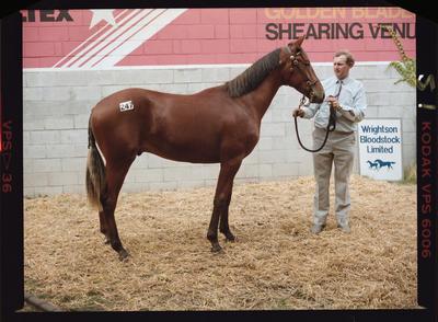 Negative: Man and Horse At Yearling Sales