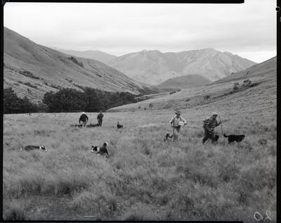 Film negative: Glyn Wye Station, sheep muster, musterers in hill country