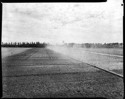 Film negative: Bisley Irrigation, new crop being irrigated