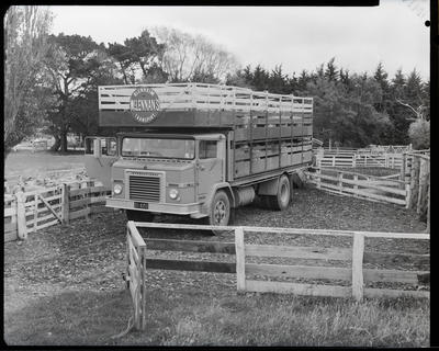 Film negative: International Harvester Company: truck and sheep decks at Halswell