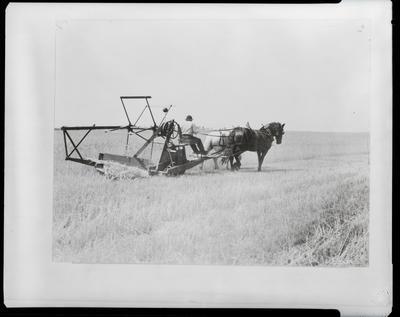 Film negative: International Harvester Company: horse-drawn reaper
