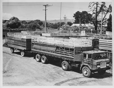 Film negative: International Harvester Company: AACO 182 Sheep truck