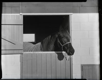 Film negative: Horse in a stable