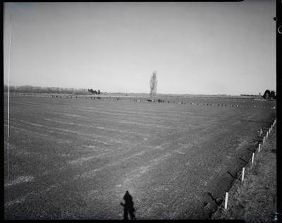Film negative: T K Blair, farm