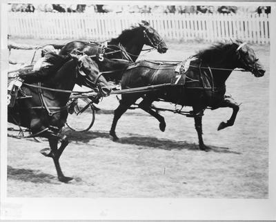 Film negative: Mr John Pringle, horses