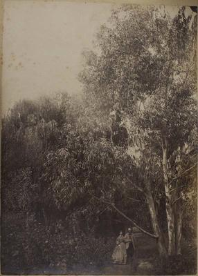Photograph: Couple Under Tree