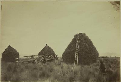 Photograph: Ohapi; 18 Feb 1870; 1958.81.49