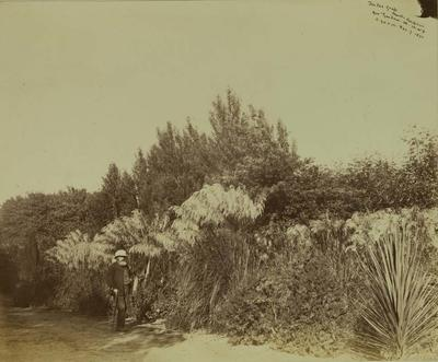 Photograph: Government Gardens, Christchurch