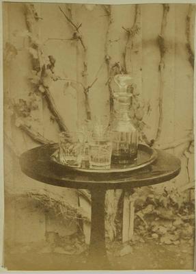 Photograph: Old Vine Tree