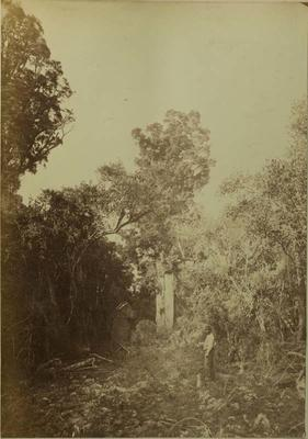 Photograph: Peel Forest