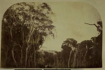 Photograph: Waitangi Bay