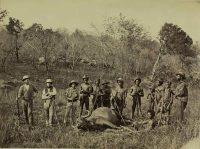 Photograph: Buffalo Cow