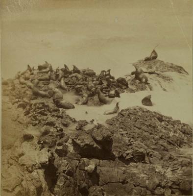 Photograph: Sea Lions