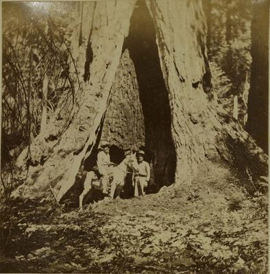 Photograph: Mariposa Grove