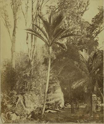 Photograph: Garden Near Nelson
