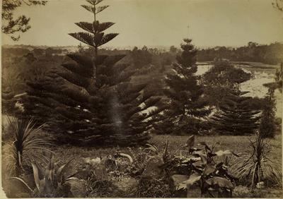 Photograph: Fitzroy Gardens, Melbourne