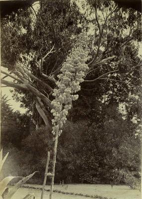 Photograph: Trees
