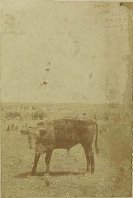 Photograph: Steer