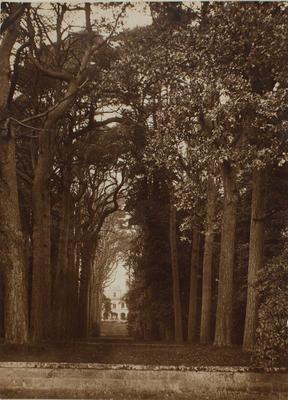 Photograph: Avenue and Stately Home