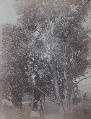 Photograph: Walk by the Trees; 1949.148.979